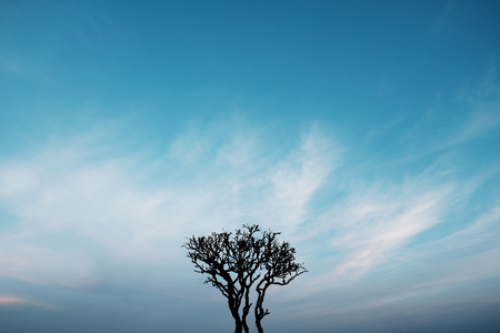 Silhouette of a tree with many branches in the centre of the frame against the blue sky with light clouds. Has a copy space