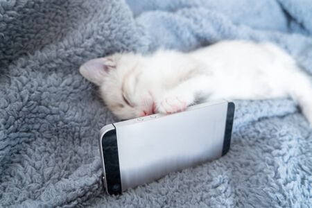 White fluffy cute kitten snuggly lies with the phone on the bed and falls asleep. The concept of communication and conversation at a distance with your pet