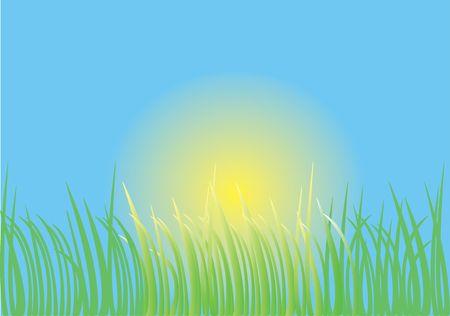 vector grass photo