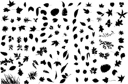 The big collection from branches, leaves, grasses, cones and other elements. For similar works search in my galleries. Stock Photo - 3633668