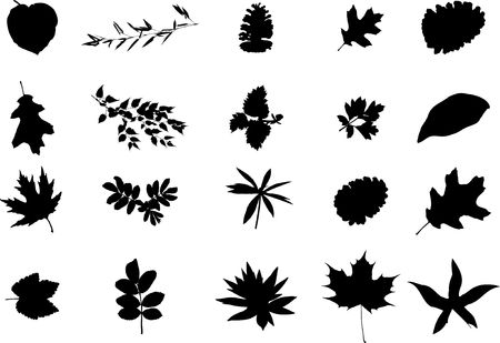 The big collection from branches, leaves, grasses, cones and other elements. For similar works search in my galleries. Stock Photo - 3633565