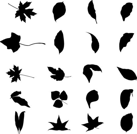 The big collection from branches, leaves, grasses, cones and other elements. For similar works search in my galleries. Stock Photo - 3633479