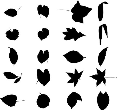 The big collection from branches, leaves, grasses, cones and other elements. For similar works search in my galleries. Stock Photo - 3633486