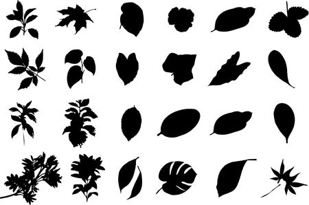 The big collection from branches, leaves, grasses, cones and other elements. For similar works search in my galleries. Stock Photo - 3633574