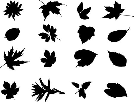 The big collection from branches, leaves, grasses, cones and other elements. For similar works search in my galleries. Stock Photo - 3633523