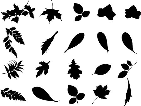 The big collection from branches, leaves, grasses, cones and other elements. For similar works search in my galleries.n photo