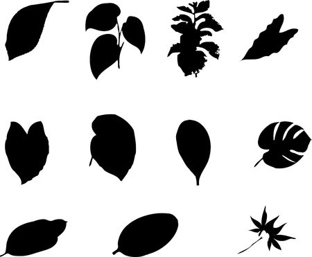 The big collection from branches, leaves, grasses, cones and other elements. For similar works search in my galleries. Stock Photo - 3633487