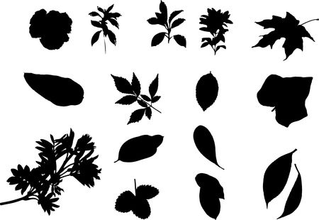 The big collection from branches, leaves, grasses, cones and other elements. For similar works search in my galleries. Stock Photo - 3633553