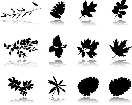 The big collection from branches, leaves, grasses, cones and other elements. For similar works search in my galleries.  Stock Photo - 3633564