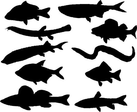 Set fish. Vector