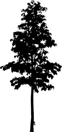 found: Silhouette a tree. Similar images can be found in my gallery.