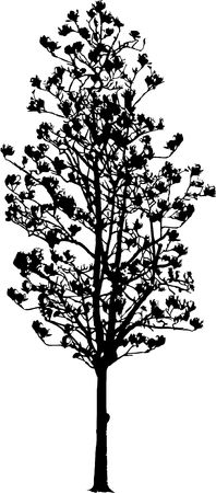 Silhouette a tree. Similar images can be found in my gallery.