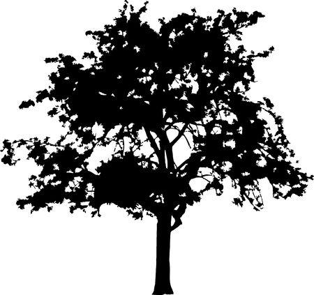 Silhouette a tree. Similar images can be found in my gallery. photo