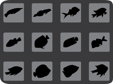 Set fish. Vector  photo