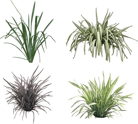 Grass collection. Vector. For similar works search in my galleries. photo