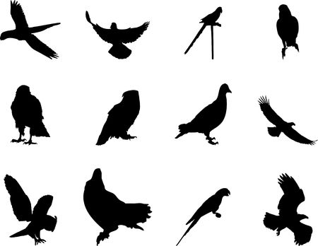 Set Birds. . Similar works are in my galleries