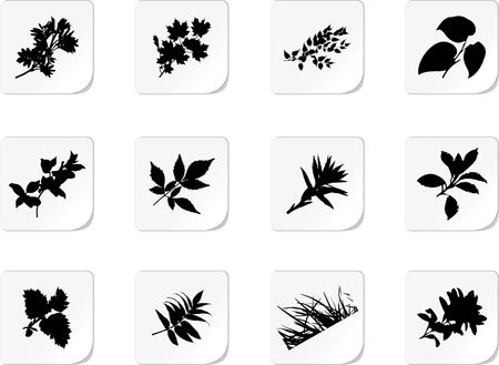 siluetas: The set from silhouettes of leaves, is presented in the form of 12 buttons. Stock Photo