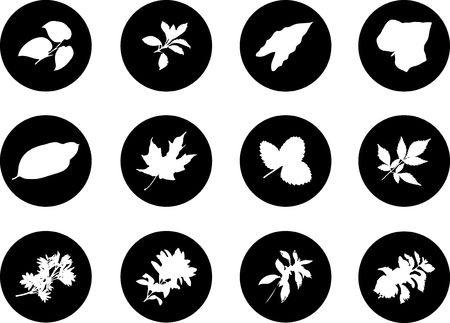 The set from silhouettes of leaves, is presented in the form of 12 buttons.  Stock Photo - 5524137