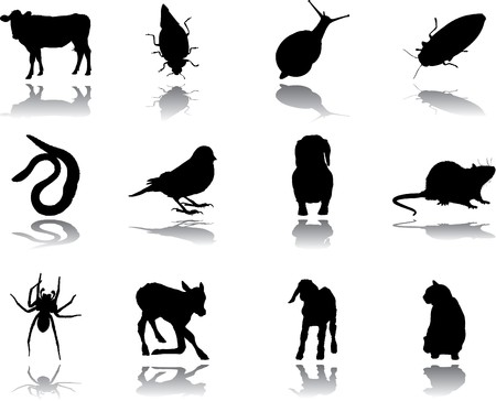Set Animals.  Stock Photo