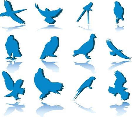 Set Birds.