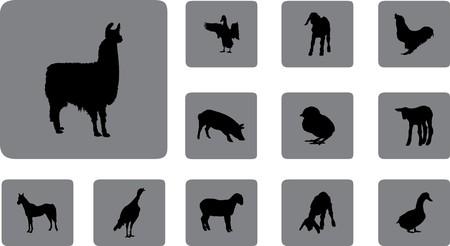 Animals.  Stock Photo - 7084087