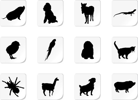 Set Animals.  photo