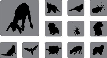 Animals.  Stock Photo - 7084098