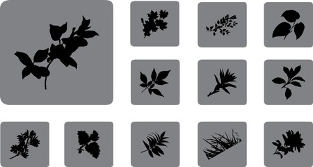 The set from silhouettes of leaves, is presented in the form of 12 buttons.  Stock Photo - 7084381