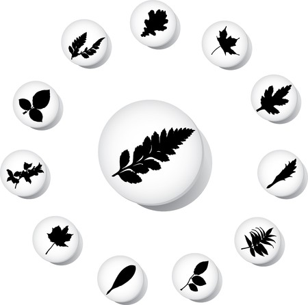 The set from silhouettes of leaves, is presented in the form of 12 buttons.