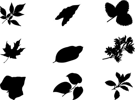 The set from silhouettes of leaves, is presented in the form of 9 buttons.  photo