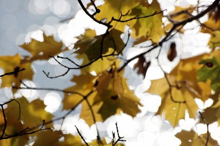 the dnieper: autumn maple leaves on the bank of the Dnieper Stock Photo