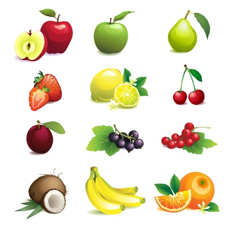 Vector Illustration of  Set of different fruits with leaves and flowers Illustration
