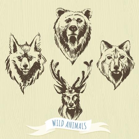 oso: Ilustraci�n vectorial conjunto de marcadores animales del bosque a mano: lobo, el oso, el ciervo, el zorro
