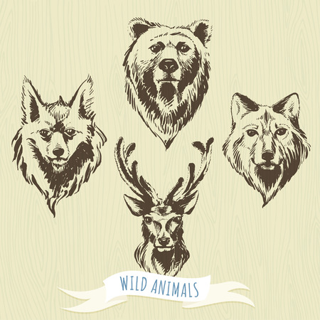 wolves: Vector illustration Set of marker hand-drawn forest animals: wolf, bear, deer, fox Illustration