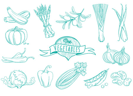 courgette: Vector illustration Outline hand drawn vegetable set (flat style, thin  line)