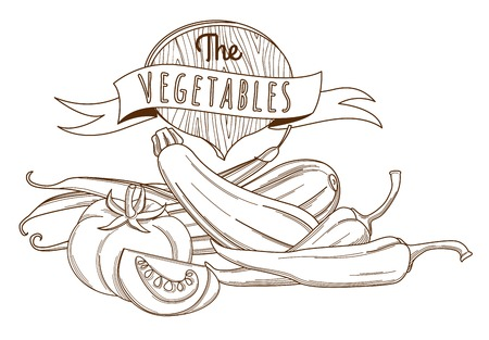 courgette: Vector illustration Outline hand drawn sketch vegetable still life flat style, thin  line