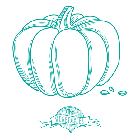 pumkin: Vector illustration Outline hand drawn sketch of pumkin (flat style, thin  line)