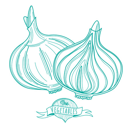 Sliced Onions Drawing Sliced Onion Vector