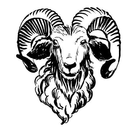 dessin noir et blanc: Vector illustration Marker animaux de ferme tirés par la main: RAM (moutons).