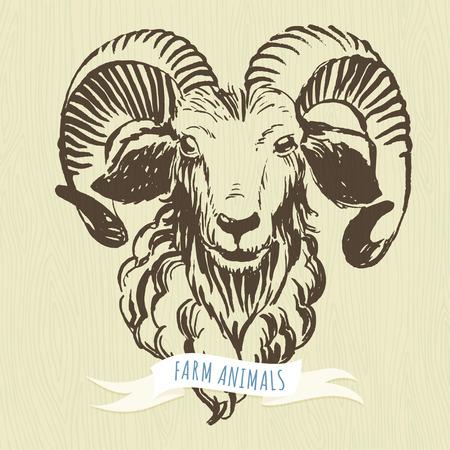 Vector illustration Marker hand-drawn farm animals: ram (sheep).