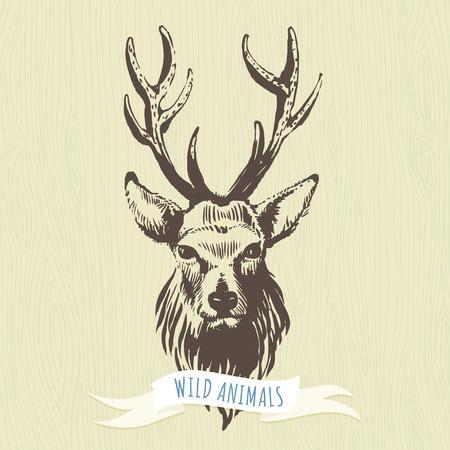 forests: Vector illustration Marker hand-drawn forest animals: deer Illustration