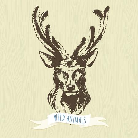 animales del bosque: Ilustraci�n vectorial de marcador animales del bosque a mano: ciervos Vectores