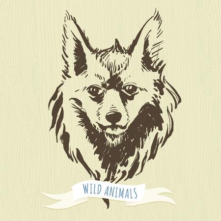 animales del bosque: Ilustraci�n vectorial de marcador animales del bosque a mano zorro