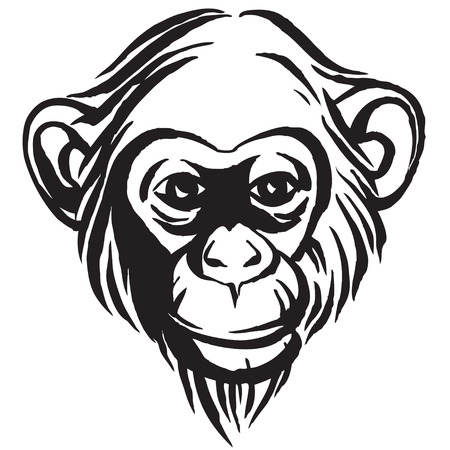 Vector illustration Hand drawn portrait of  monkey chimpanzee. Black and white
