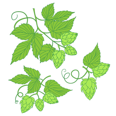 stout: Hops vector illustration  icon, ideal for beer, stout, ale, lager, bitter labels & packaging etc. Hop is a herb plant which is used in the brewery of beer. Illustration