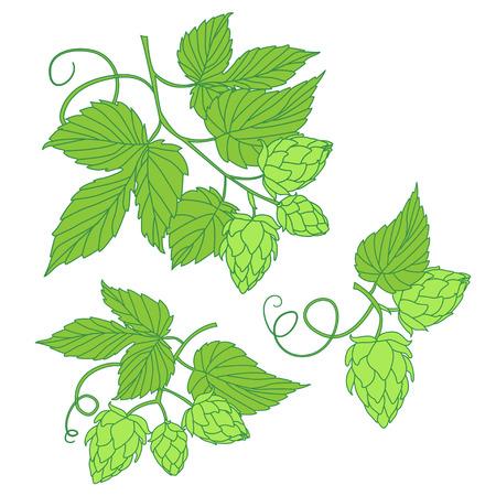 cerveza negra: L�pulo icono del vector, ideal para la cerveza, cerveza de malta, cerveza inglesa, cerveza dorada, etiquetas y envases amargas etc. l�pulo es una planta herb�cea que se utiliza en la f�brica de cerveza de cerveza. Vectores