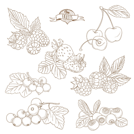 Vector illustration Set of Outline hand drawn berries ( blackberry, cherry, strawberry, currant, raspberry, blueberry)
