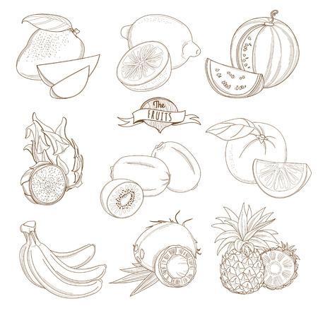 coconuts: Vector illustration Set of Outline hand drawn fruits with leaves ( mango, lemon, watermelon, dragonfruit, kiwi, orange, grapefruit, banana, coconut, pineapple)