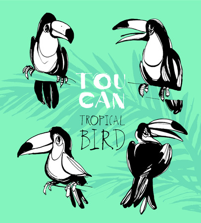 tucan: Vector illustration Tropical summerset with toucan birds. Ink splatter grunge style.Texture, tropical birds, tropical background, summer time, summer party Illustration