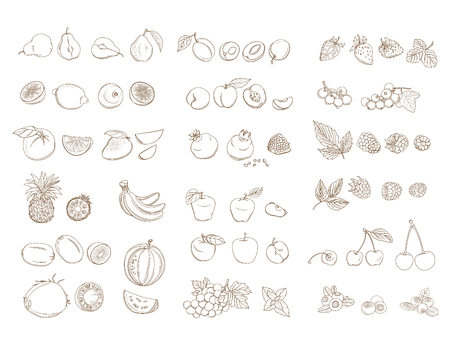 Set of organic farm fresh fruits and vegetables: apple, pear, pineapple, watermelon, berries, banana, grapes, coconut. Vector illustration. Outline line flat style design. White backdrop.